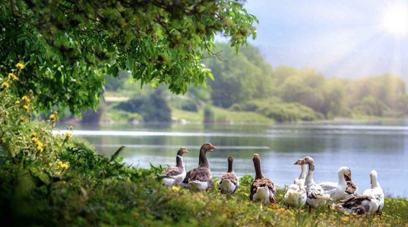 4 de Octubre Tal Día como Hoy Día Mundial Animales Secretos de Dorian Revista LSDD