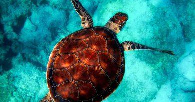 Día Mundial de las Tortugas - 23 de Mayo - Tal Día como Hoy - Efemérides y Curiosidades - Los Secretos de Dorian: El Magazine de la Eterna Juventud