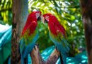 Día Internacional de los Trópicos - 29 de Junio - Tal Día como Hoy - Efemérides y Curiosidades - Los Secretos de Dorian: El Magazine de la Eterna Juventud