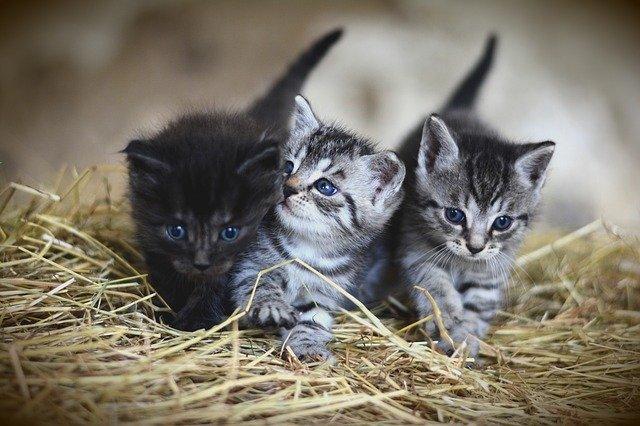 Gatos Lindos Los Secretos de Dorian