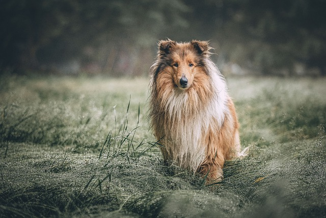 Perros Lindos Los Secretos de Dorian