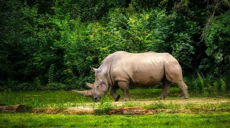22 de Septiembre Tal Día como Hoy Rinoceronte Secretos de Dorian Revista LSDD